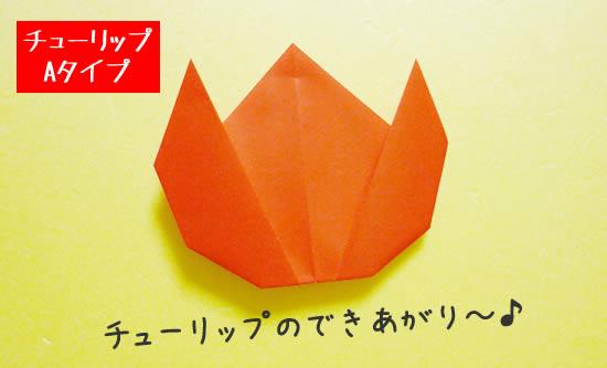 チューリップA 花の出来あがり~!