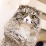 飼いやすい猫プラス6種類!